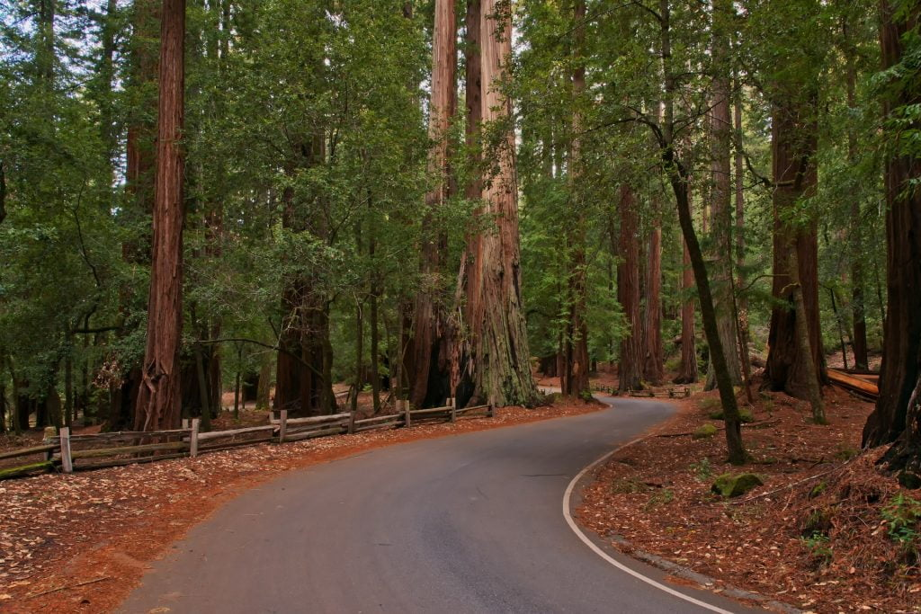 Redwood National Park in California is among the Best Places to visit in the USA